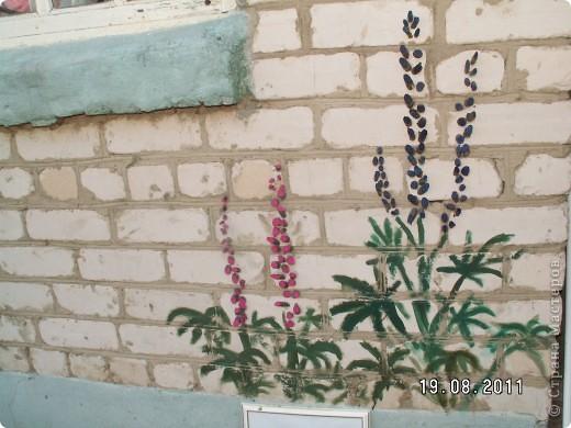 Люпины на стене