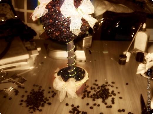 Моё маленькое кофейное дерево!) фото 1