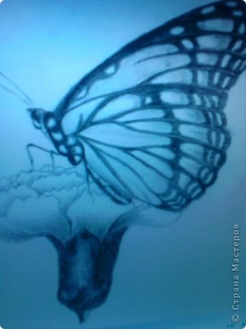 И ещё одна бабочка