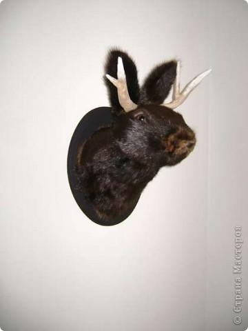 <b>Джекалоп</b> – вымышленное существо, заяц с рогами антилопы, популярный персонаж американского фольклора. Водится, естественно, в прериях. Размножается только во время грозы. Легче всего ловить джекалопов на виски. фото 2