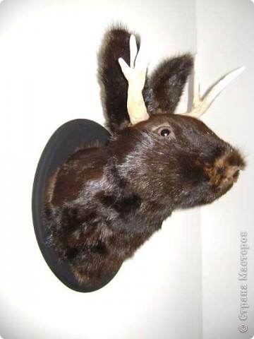 <b>Джекалоп</b> – вымышленное существо, заяц с рогами антилопы, популярный персонаж американского фольклора. Водится, естественно, в прериях. Размножается только во время грозы. Легче всего ловить джекалопов на виски. фото 1