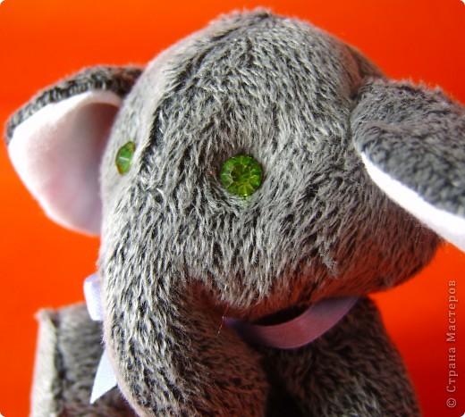 Слоник мохнатый,при звуках диско-теряет волю. фото 6