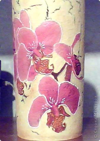 О простоте и блеске орхидей фото 4