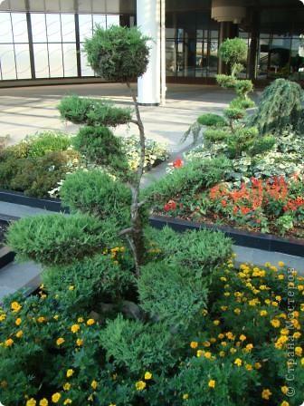 Во внутреннем дворике замечательные клумбы. Очень много хвойных растений посажено. Здесь те, что подстрижены под бонсайки.  фото 1