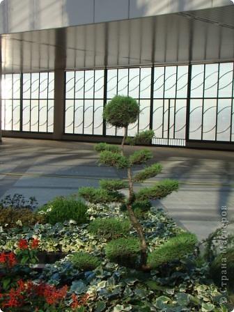Во внутреннем дворике замечательные клумбы. Очень много хвойных растений посажено. Здесь те, что подстрижены под бонсайки.  фото 3