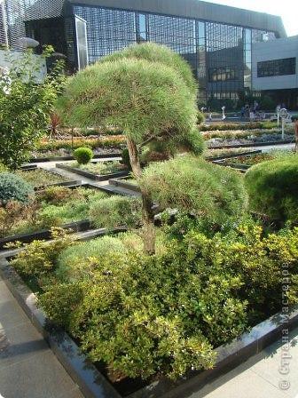Во внутреннем дворике замечательные клумбы. Очень много хвойных растений посажено. Здесь те, что подстрижены под бонсайки.  фото 4