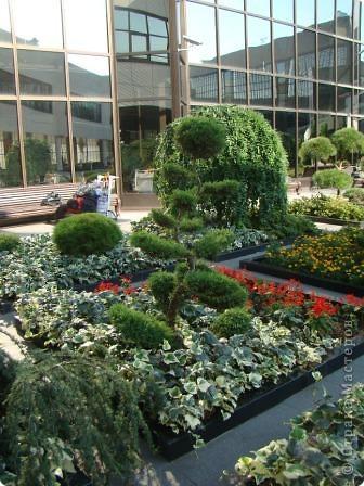 Во внутреннем дворике замечательные клумбы. Очень много хвойных растений посажено. Здесь те, что подстрижены под бонсайки.  фото 5