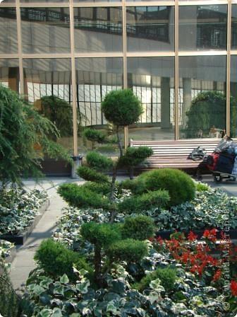 Во внутреннем дворике замечательные клумбы. Очень много хвойных растений посажено. Здесь те, что подстрижены под бонсайки.  фото 6