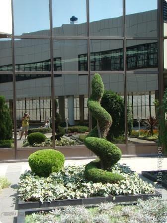 Во внутреннем дворике замечательные клумбы. Очень много хвойных растений посажено. Здесь те, что подстрижены под бонсайки.  фото 8