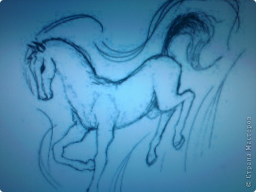 Мои лошади. фото 2