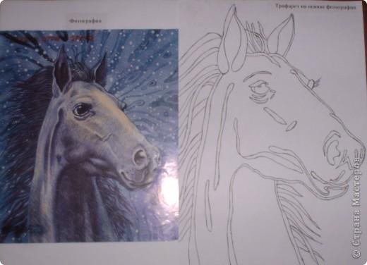 Узнать о лошадках всё. Полюбоваться красотой лошадки. Выбрать фотографию. Сделать трафарет по фотографии.  фото 1