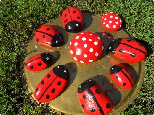 Около наших камышей появились насекомые...божьи коровки и бабочка.. фото 7