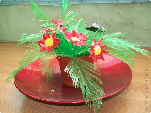 мои цветок фото 2