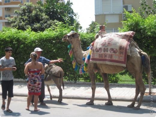 Добрый день жители и гости Страны Мастеров! Предлагаю Вам посмотреть фотографии моего путешествия в Турцию. Приехала 4 дня назад. Ездила с подругой по турпутёвке на 12 дней. Сказать, что очень понравилось, значит ничего не сказать... Это просто сказка! Посмотрите, какие в Турции красивые места! Многие фото сделаны из окна автобуса, так что, извините за качество фотографий. фото 1
