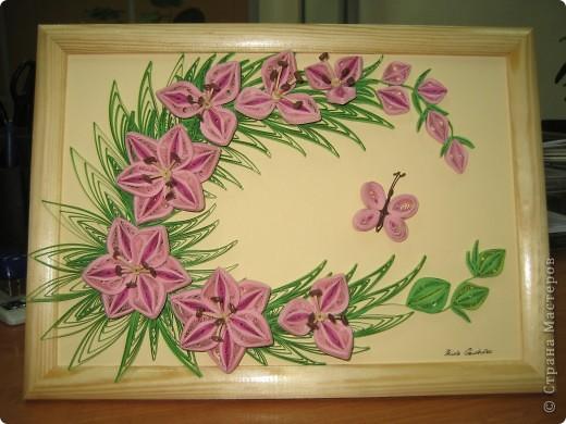 Лилии фото 1