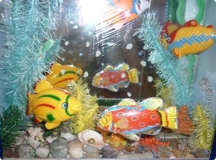 содержание аквариума  фото 1