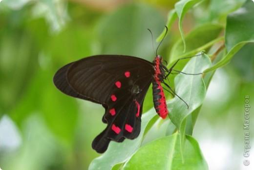 самые красивые бабочек и зверей  фото 1