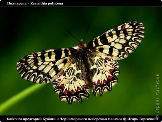самые красивые бабочек и зверей  фото 2