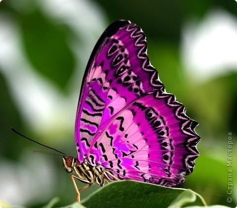 самые красивые бабочек и зверей  фото 3