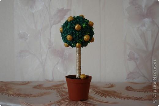 Апельсиновое дерево для не замужней подруги (повторюшка)