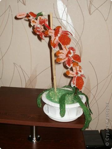Орхидея для мамы фото 1