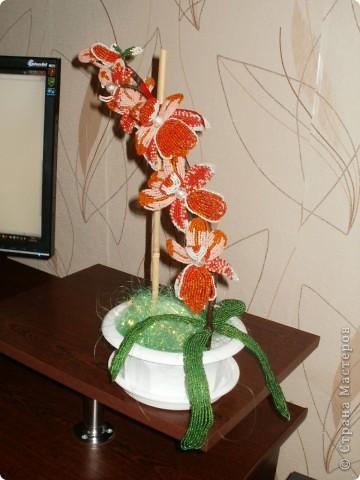 Орхидея для мамы фото 3