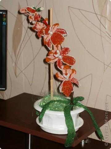 Орхидея для мамы фото 2