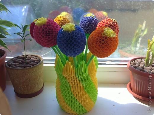 Вот такие кактусы фото 2