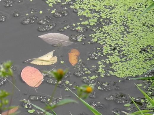 Золотая осень, моя любимая  пора, когда днем еще тепло, сухо , появились желтые листья и можно гулять и шелестеть , идти и петь. За окном у меня-ночь. А мне не спится, я еще полна той энергетикой минувшего дня, который я провела на природе с подругой. фото 6