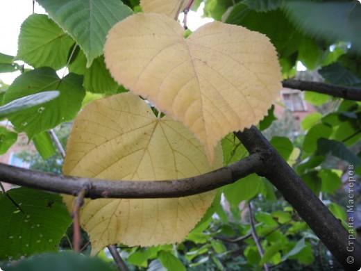 Золотая осень, моя любимая  пора, когда днем еще тепло, сухо , появились желтые листья и можно гулять и шелестеть , идти и петь. За окном у меня-ночь. А мне не спится, я еще полна той энергетикой минувшего дня, который я провела на природе с подругой. фото 11