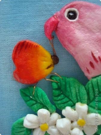 Вот такие попугайчики у меня родились...) фото 2