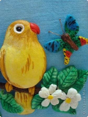 Вот такие попугайчики у меня родились...) фото 4