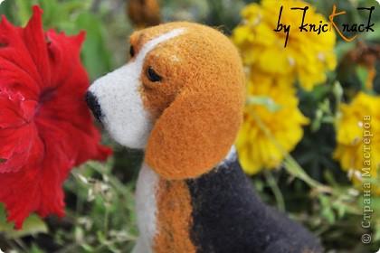 Бигль Сухое валяние шерсти  Размер-12 см Материалы - шерсть тонкая овечья, лак, бусины фото 5