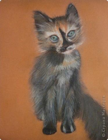 Котята, совы и коты:) фото 1
