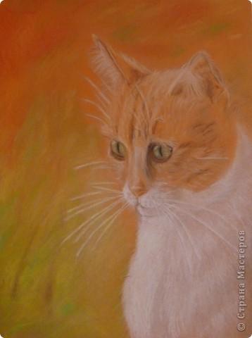 Котята, совы и коты:) фото 3