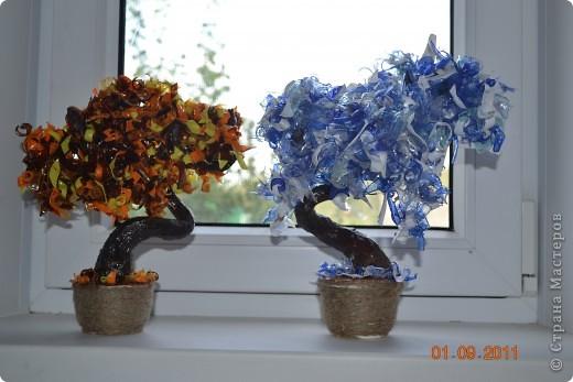 Мои первые деревья из пластиковых бутылок.  Ваяла на даче благо бутылок валялось вокруг полно. Каждое дерево состоит из 4 цветов бутылок.  фото 1