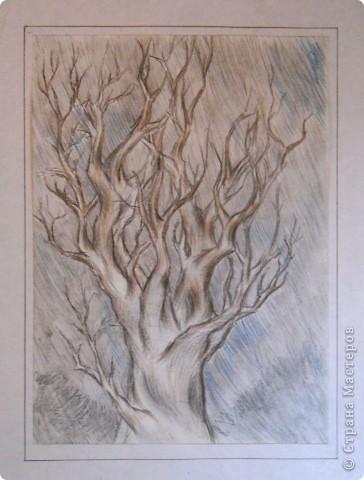 Немного графики деревьев фото 3