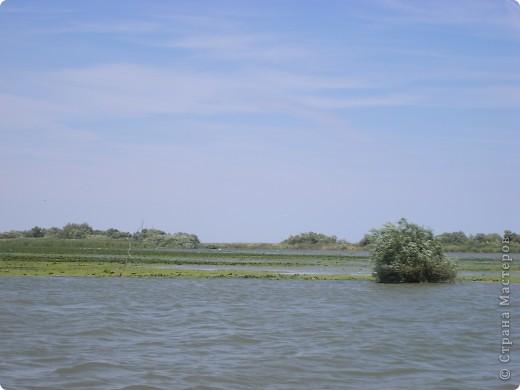 Отдыхая в Одессе в августе этого года, мне довелось посетить несколько интересных мест. Одним их них стало Вилково – так называемая «Украинская Венеция», последний населенный пункт на побережье Дуная перед его впадением в Черное море. Вилково вызвало у меня довольно-таки противоречивые чувства. Ничего подобного увидеть я не ожидала. фото 18