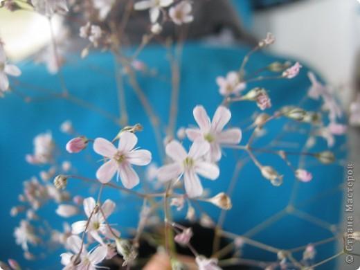 В августе с дочкой и с друзьями ездили в БаянАульский Национальый Парк (Павлодарская область). Все цветы фотографировала в горах. Ни одного названия не знаю. Знаю точно, что они все красивы и радуют глаз. фото 4