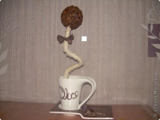 мое первое кофейное деревце. Не судите строго. Но если будут какие-то дополнения буду только рада. фото 2