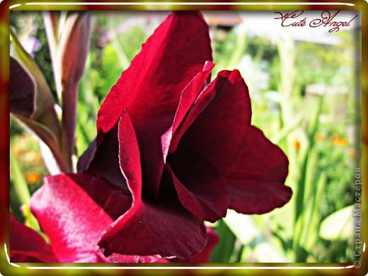 Осенние цветы фото 5