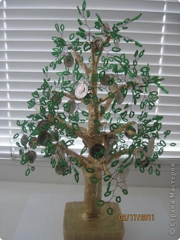 Еще одно, денежное дерево фото 1