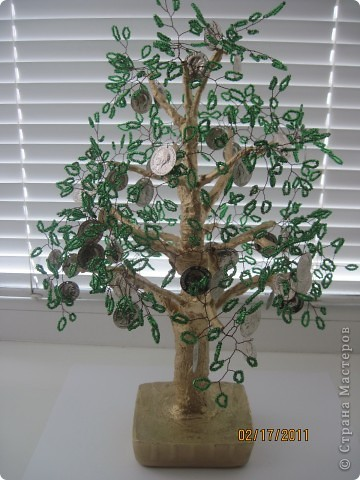 Еще одно, денежное дерево фото 2