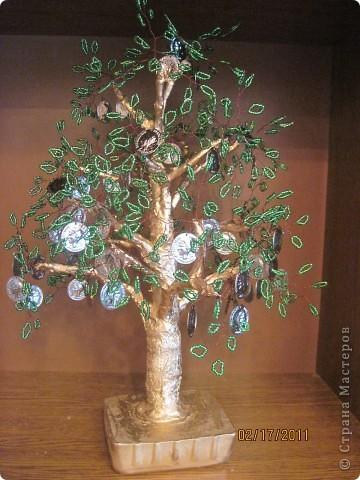 Еще одно, денежное дерево фото 3