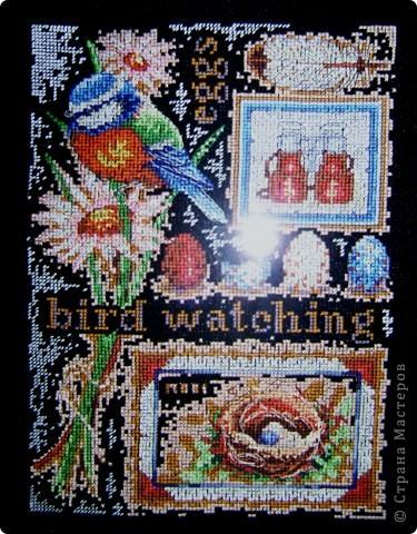 Утки и синицы фото 2
