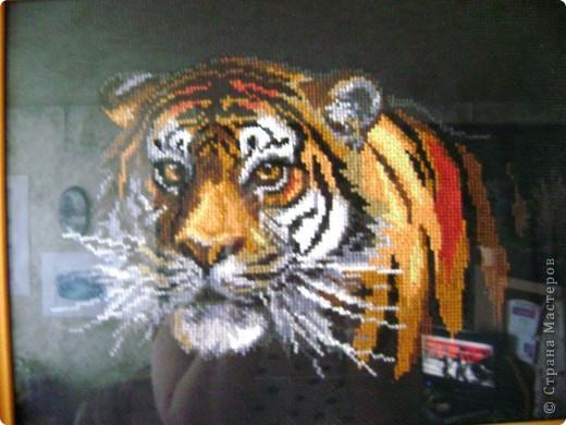 Тигры (наборы) фото 2