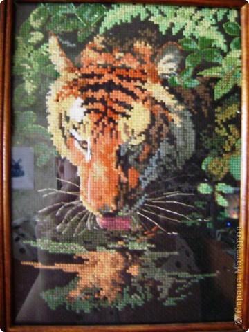 Тигры (наборы) фото 1