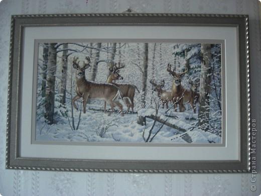 Олени в зимнем лесу фото 1