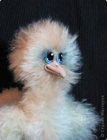 Добрый день! Посмотрите, кто у меня роидился)) Такая нежная, милая, пушистая, и конечно, любопытная птичка))  фото 9