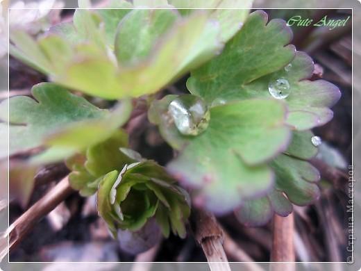 после дождя в рубиновых россыпях ромашка фото 4